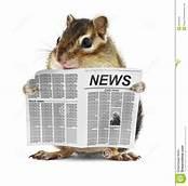 Rat qui lit
